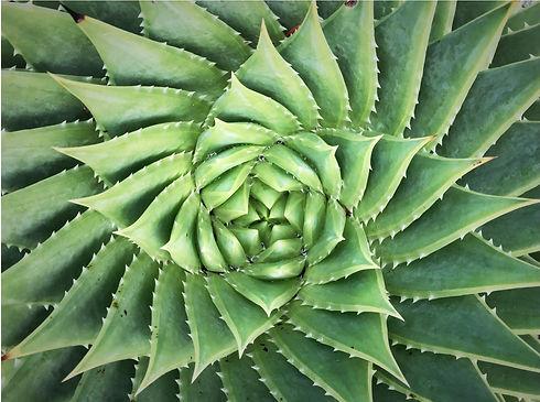 graphic designer succulent image.jpg