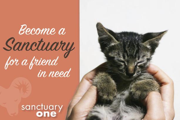 pet animal sanctuary direct mail design