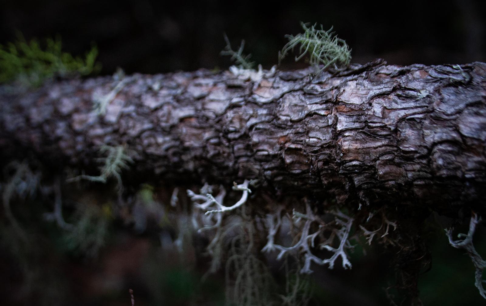 Oregon Forest Plants-05