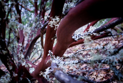 Oregon Forest Plants-07