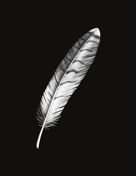 red tail hawk feather edited.jpg