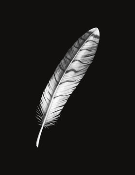 red tail hawk feather illustration photoshop
