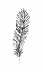 feather illustration with white background
