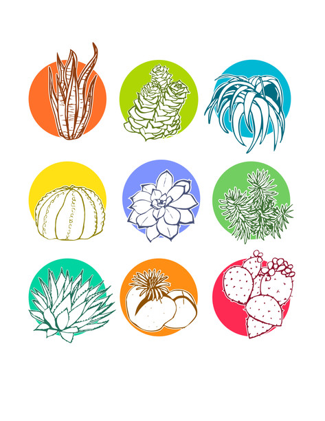 colorful succulent graphic design icon set