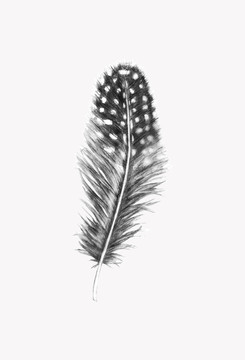 spotted feather black and white illustration on white background