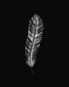 feather illustration with black background
