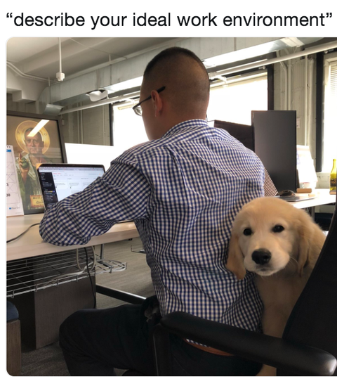 dream-job-dog-meme-1546549215.png