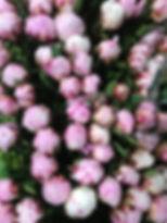 U2RKae56SXap1YRXHotO8g.jpg