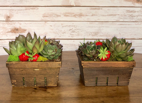 strawberry succulent basket