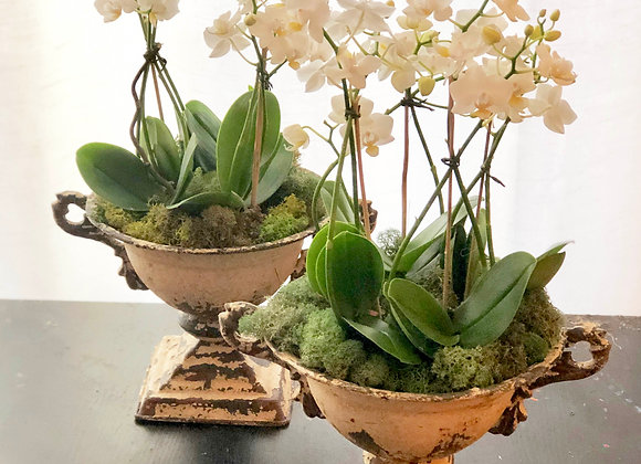 Mini white Orchid Display