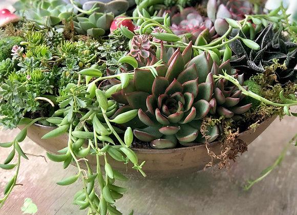 Rustic Succulent Bowl