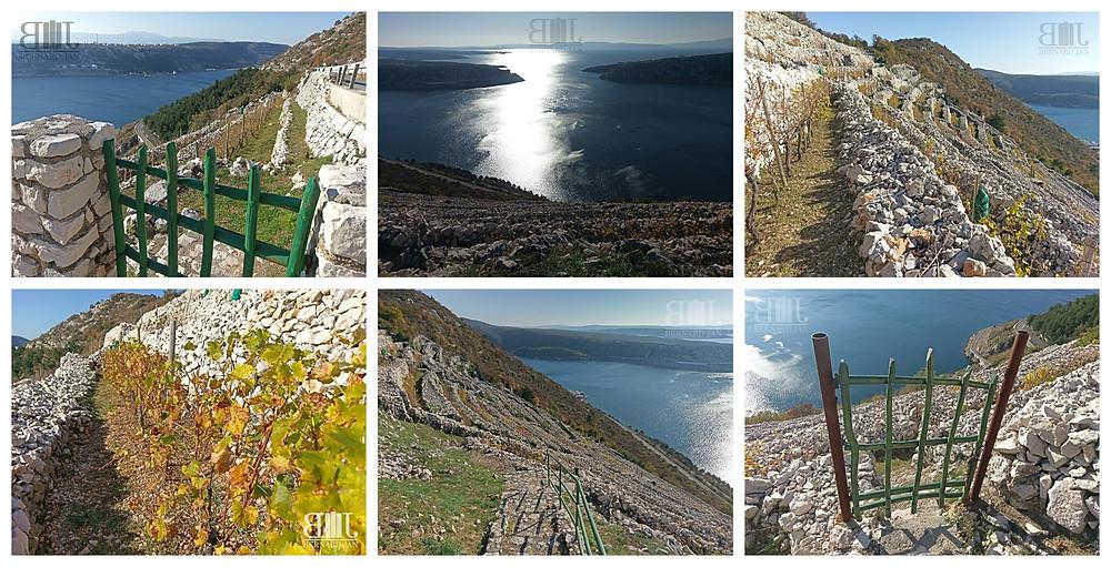 Photos by Bernard Jan - Bakar's terraced drystone walls, Croatia, November 2020