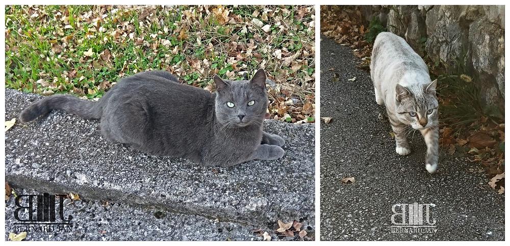 Photos by Bernard Jan - Grobnik cats, Croatia, November 2020