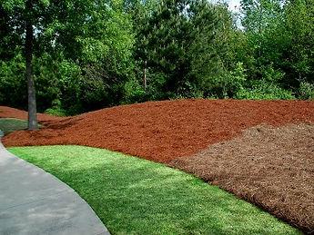 charlotte pine needles,mulch,firewood,pinestraw