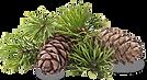 Greater Charlotte region pine needles