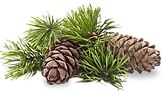 Buy pine needles greater charlotte region