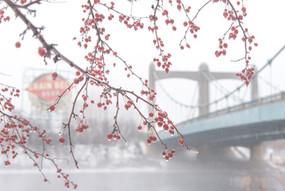 Fog at Hennepin Ave Bridge by Mary Johnson