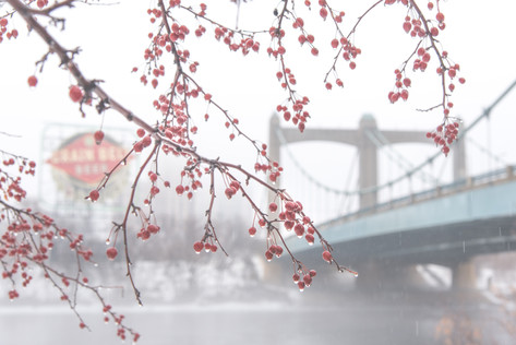 Fog at Hennepin Ave Bridge by Mary Johnson