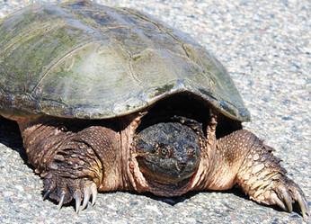 Turtle by Pat McLean