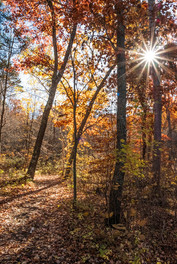 Walking in the Woods by Terry Sposito