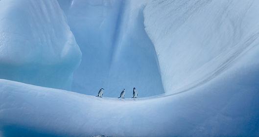 72,Frozen.jpg