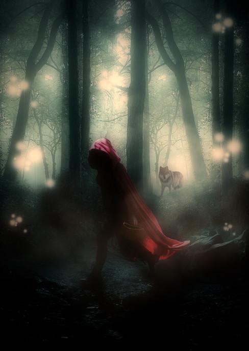Journey in the Dark Forest