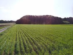 小麦IMG_20160415_150413