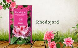 Rhodojord