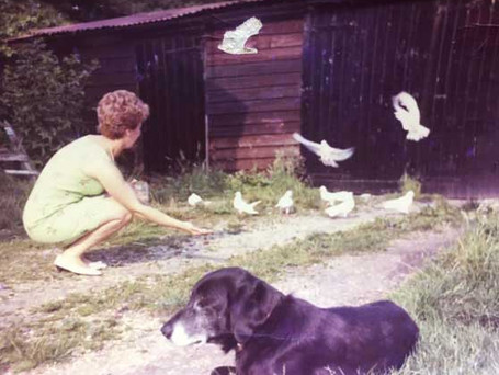 The Doves and Pub Dog