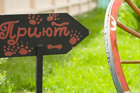 приют Солнцево, приют для собак Солнцево, приют для собак, взять собаку из приюта, собаки приюта Солнцево