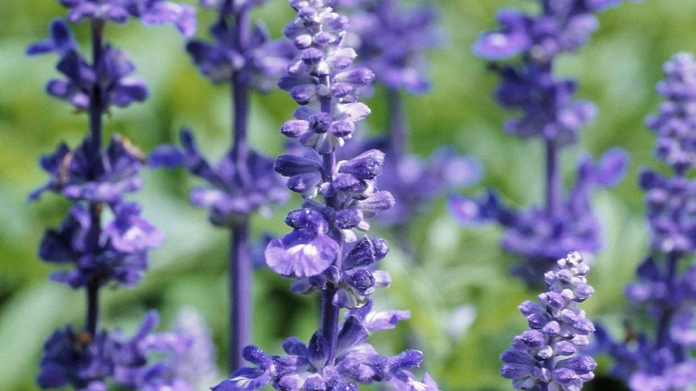 Lavender Lace Body Care Set