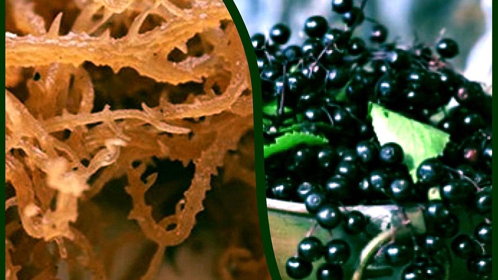Immune Defense Kit Elderberry / Sea Moss Fix