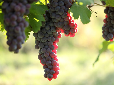 The New Project from the Roscioli Family - Community.Wine & VinumVersity
