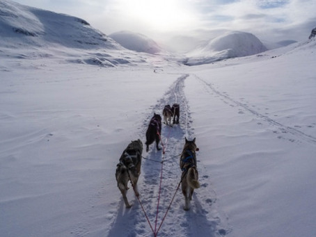 Angie & Barbara's -  Arctic Wilderness Husky Trail Sledding   260 km for Cancer Research UK