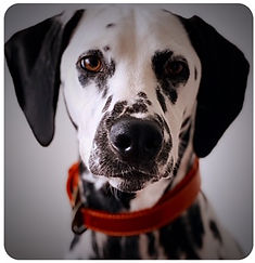 LOU DOG.jpg