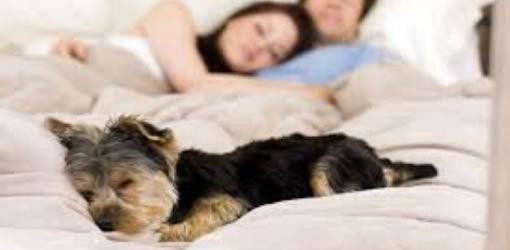 Cachorrinho na cama.jpg