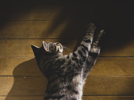 How to do Cat Photography