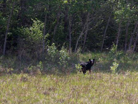 How to Find Wildlife in Saskatchewan