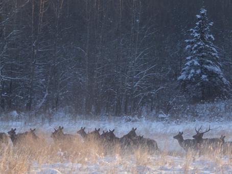 Noting Changes in Animal Behaviour in the Parkland Regions of Saskatchewan