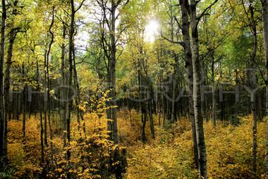 Autums Forest 2017.jpg