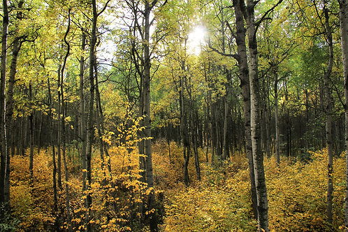 Autumn's Forest