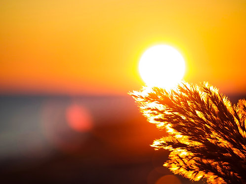 sunrise, beach, backlight, nature, sun, nature
