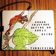 slefever-sketchbook-cubantreefrog.jpg