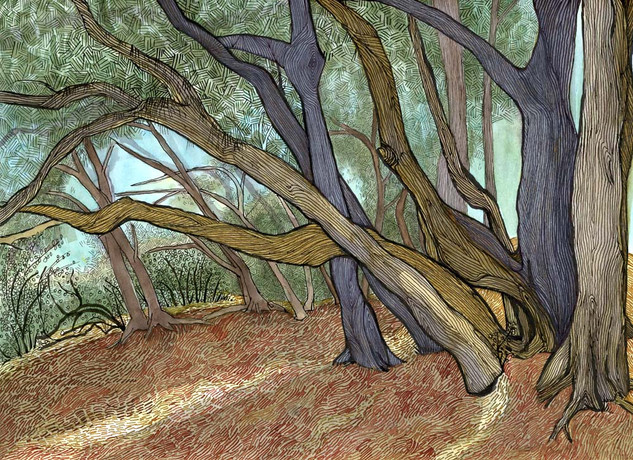 [Australian Pines (summer), South Lido]