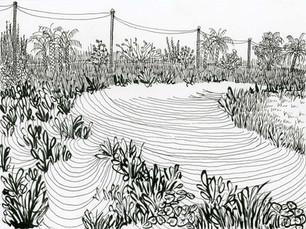Celery Fields