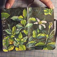 slefever-sketchbook-beggers tick.jpg