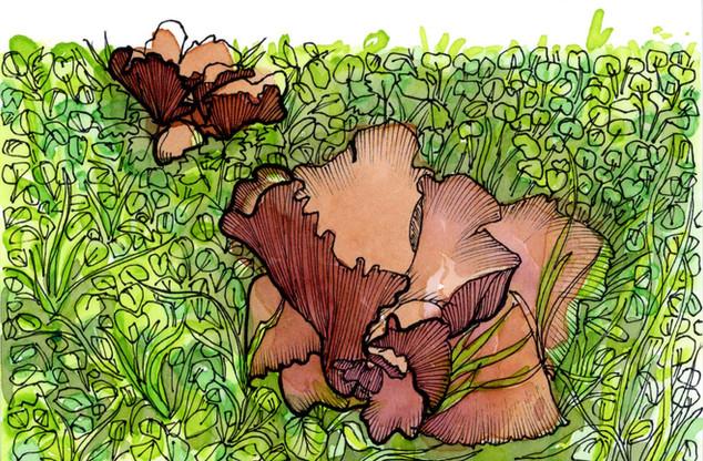 Pauline's Mushrooms
