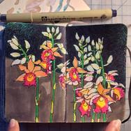 slefever-sketchbook-orchids.jpg