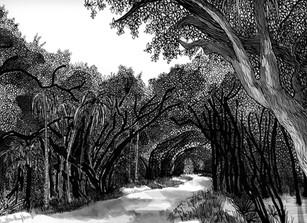 Entering Myakka Park