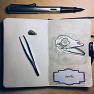 slefever-sketchbook-anoleskull.jpg